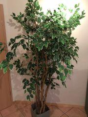 Ficus Benjamini Kunstblume