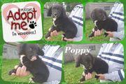 Kleine Poppy sucht liebe Familie