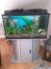 Aquarium 126 L kompl mit