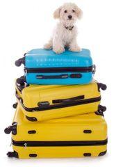 Biete Urlaubsbetreuung für Hunde