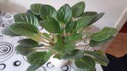 Pflanze zuverkaufen