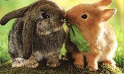 kastrierte Kaninchen Buben abzugeben