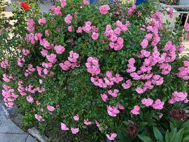 Bild 4 - Ein schöner Garten nach Ihren - Osterhofen