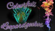 Aufnahem von Leopradgeckos und Taggeckos