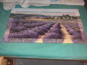 schönes Lavendelfeld Bild