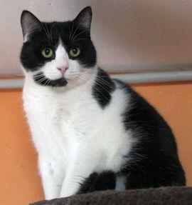 Katzen - Katze Sternchen sucht Zuhause zu