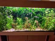 8 Arten Aquarium Wasserpflanzen Pflanzen