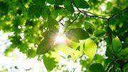 Lass die Sonne in dein