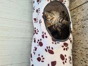 Katzenbabies suchen liebevolles Zuhause