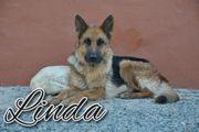 Möchten Sie Linda ihren Lebenstraum