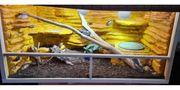 LeatherbackZwergbartagame Weibchen mit Terrarium zu