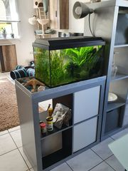 Aquarium 54 Liter mit Besatz