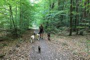 Dogwalker Hundesitter Ausbildung