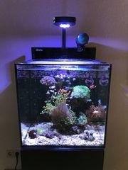Meerwasseraquarium Red-Sea Max Nano 75L