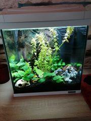 Aquarium 30 Liter ohne Pflanzen