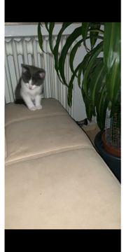 Süße Baby Katzen suchen zuhause