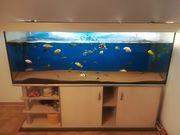 Aquarium 850 lt