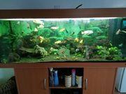Juwel Aquarium 450 l komplett