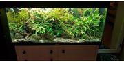 Aquarium Juwel 200 Liter