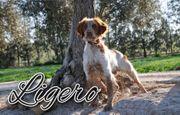 Wollen Sie mit Ligero ein