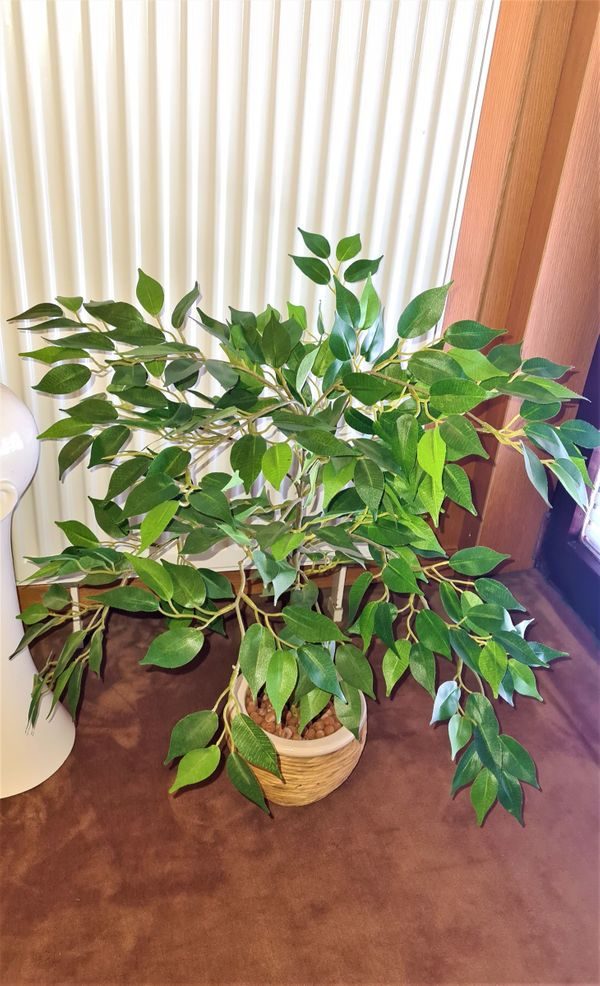 Ficus Benjamin Künstliche Kunstpflanze Kunst