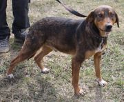 DENSON - der perfekte Familienhund