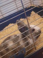 Kaninchen sucht schnellstmöglich neues Zuhause