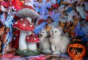 Die 2-BKH Katzenbabys