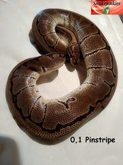 0 1 Pinstripe Adult von