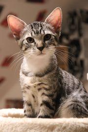 Moritz Kitten Kätzchen Kater Katzenbaby