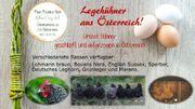 Legehühner aus Österreich