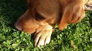 Hundebetreuung Dogsitting Spazierengehen