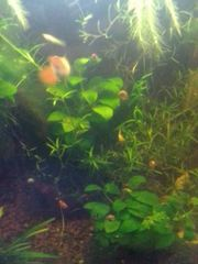 Aquarium Deenerle 30L