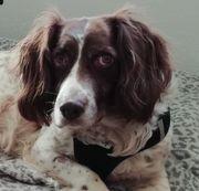 Daisy 7 Jahre kastriert