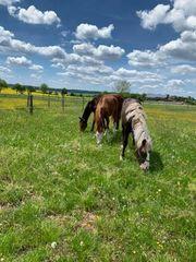 Fohlenaufzuchtplätze für Stut- und Hengstfohlen
