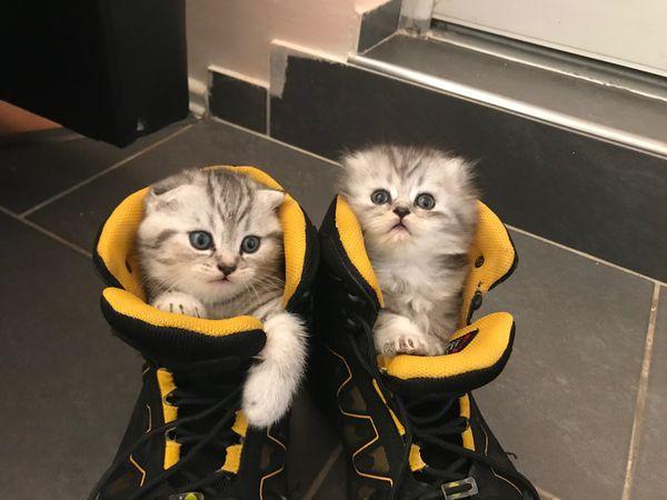 kitten suche neu hause