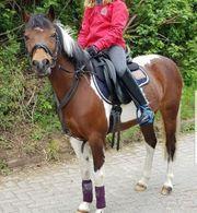 Verkaufe deutsches Reit Pony Stute