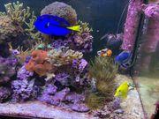 Auflösung Meerwasser Aquarium