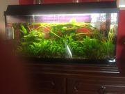 Aquarium mit Fischen zu verkaufen