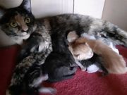 Die Kitten sind schon da