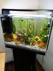 Superfish 80 Home
