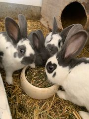 Kaninchenbetreuung Kaninchen Urlaubsbetreuung Tierbetreuung