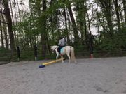 Mithilfe im Stall Pferdeerfahrung