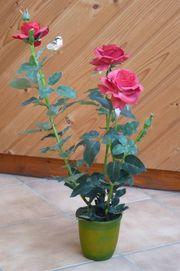 Rosenbusch im Topf 70cm rot