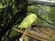 Suche einen Vogelkäfig für Karantäne