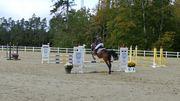 Reitbeteiligung gesucht Reiterin sucht Pferd