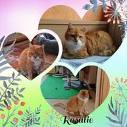 Wunderschöne Katze rot Rosalie 8