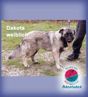 Dakota - ist noch recht kindlich