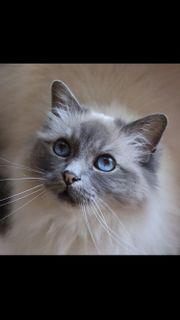 Katzenbetreuung für Urlaub gesucht