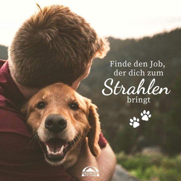 Ein tierisch guter Job